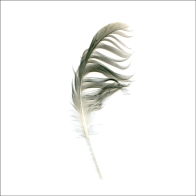 Feather, Scanography
