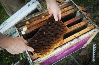 bee hive close