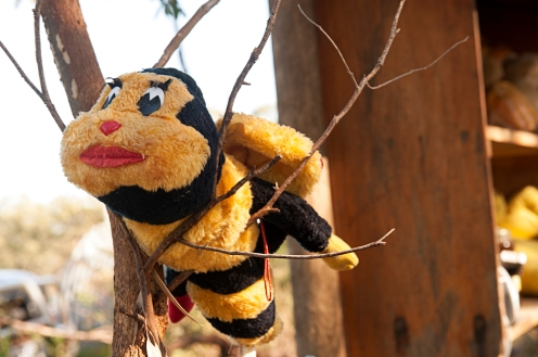soft bee