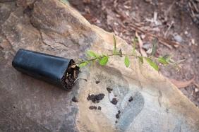 seedling on rock