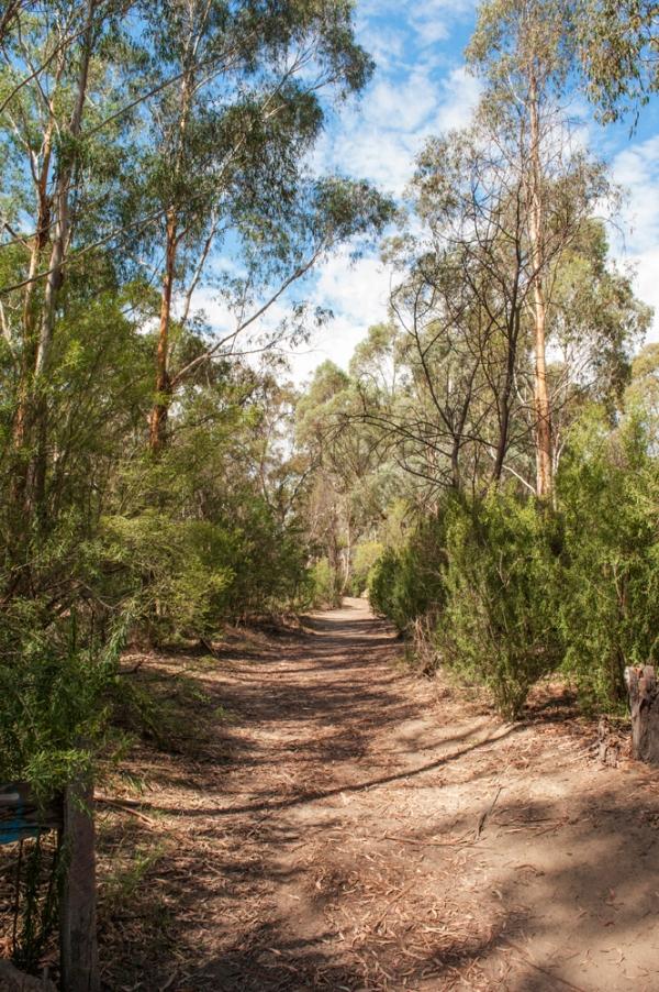 nillumbik bush 2