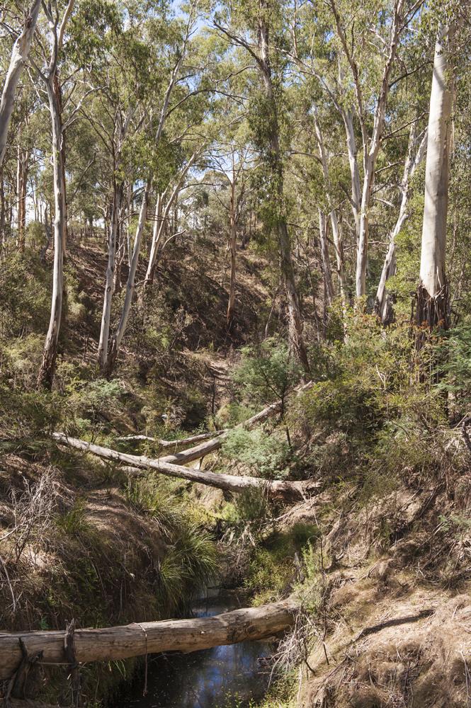 nillumbik bush 6