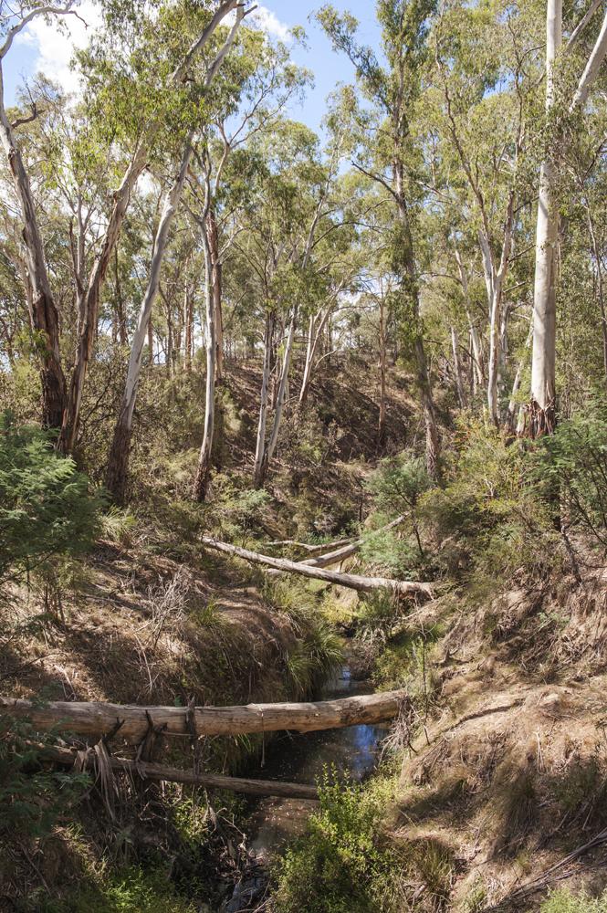 nillumbik bush 9